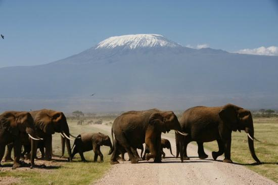 Tortilis Camp: Plenty of elephants to see