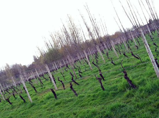 McMenamins Edgefield: vineyard