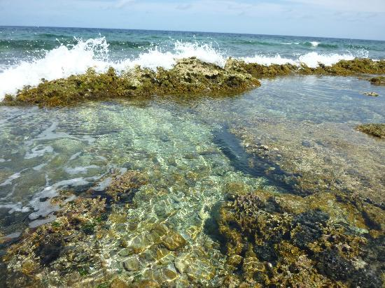 LacBaai: Lac Bay  Reefs and Ocean