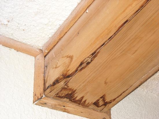 Quality Inn Omaha: wood trim along ceiling