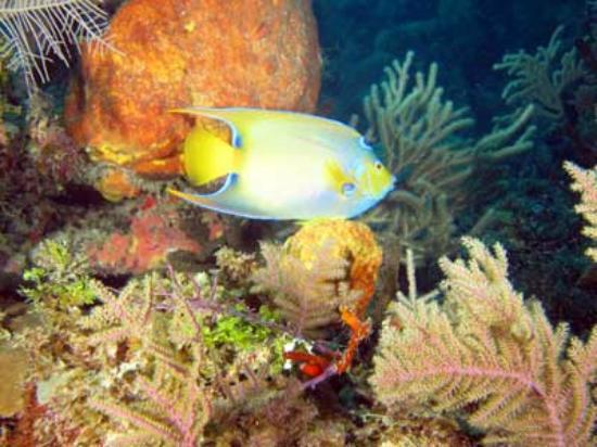 Jardines De La Reina: Corais preservados e um lindo CIliares