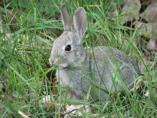 Bush Bunnies Abound In Their Natural Habitat