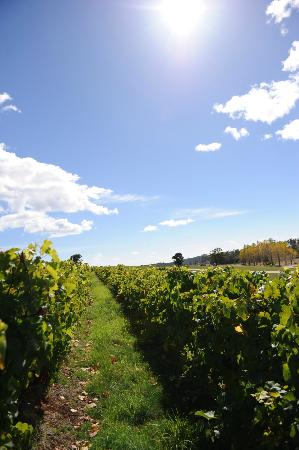 Pipers Brook Vineyard: lovely drive to the cellar door