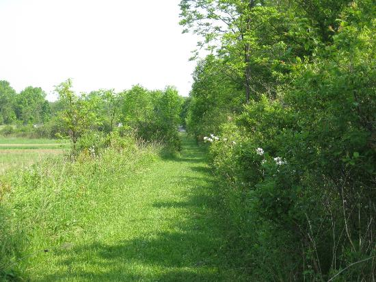 Finger Lakes Mill Creek Cabins: Sunny walk around the field. Bunnies, birds, and fresh air.