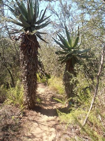 Bontebok National Park: interesting trees during the hike