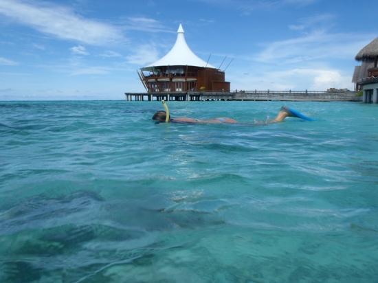 Baros Maldives: Snorkel
