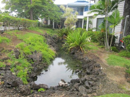 "Wyndham Mauna Loa Village: grounds with ""rivers"" which had small fish in them"