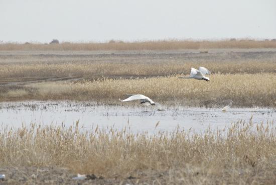 Ulaangom, มองโกเลีย: Extensive marshlands - litter is a growing problem