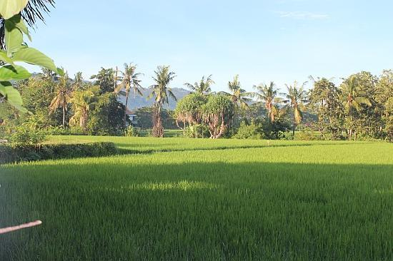 Mumbul Guesthouse : This is the view from our restaurant