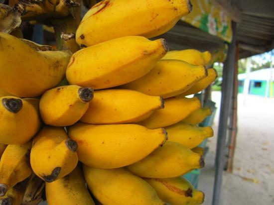 Tanu Beach Fales: Free bananas at all hours of the day