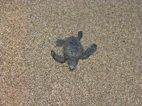 Vallarta Torre: Go little turtle go