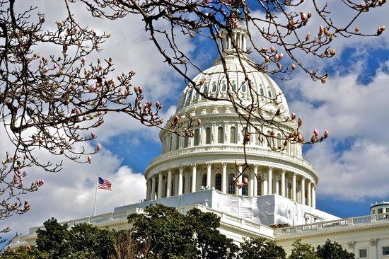 U.S. Capitol:                   before cherry blossom