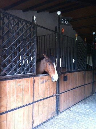 Centre Equestre Molino de la Umbria