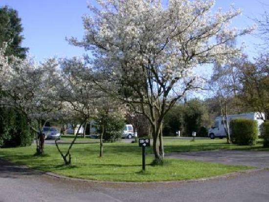 Bath Marina and Caravan Park: Pitches