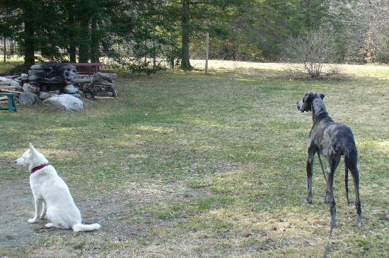 Eden Mountain Lodge: Kadoc our great dane and Luna