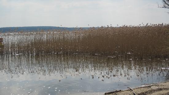 A-ROSA Scharmutzelsee: Blick aus Strandkorb auf See