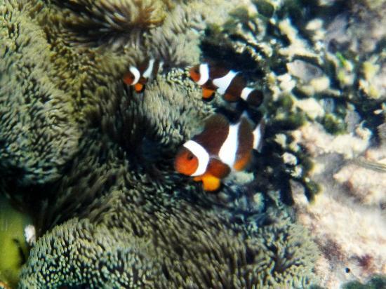 El Nido Resorts Miniloc Island: Nemo