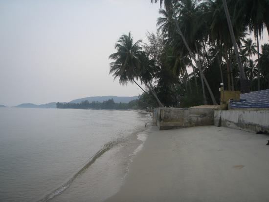 Lipa Bay Resort: The beach infront of the hotel