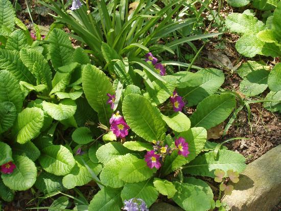 Native Flowers Coker Arboretum