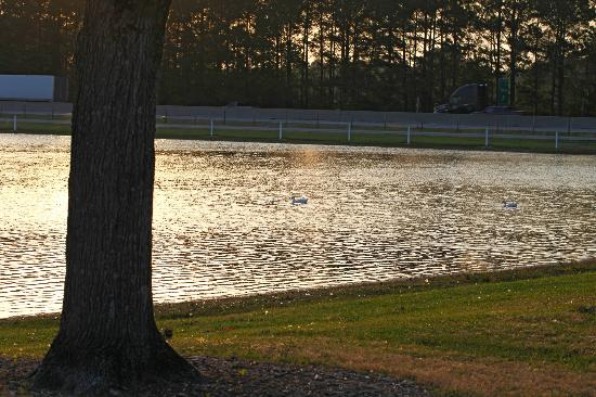RVacation Campground : Fishing lake with ducks
