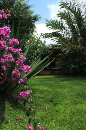 Tacacori EcoLodge: From garden looking at Poro
