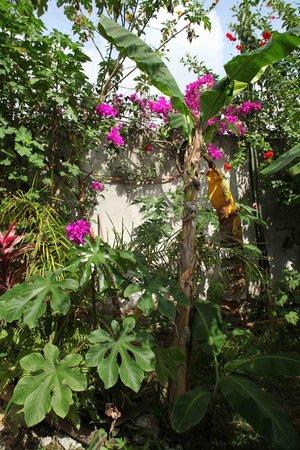 Calm Cabins Tulum: Garden