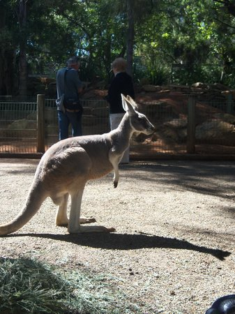 Blue Mountains Canyon and Wildlife Discovery Tour