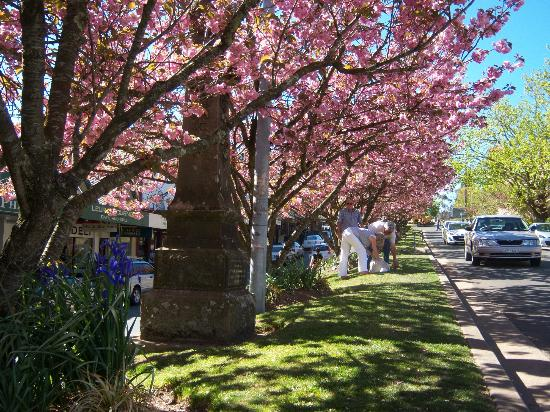 Blue Mountains Canyon and Wildlife Discovery Tour: Beautiful town of Leura