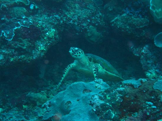 World Diving Lembongan: An exceptional underwater life, especially corals !