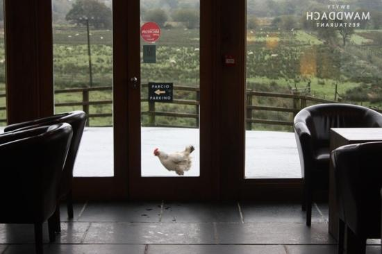 Bwyty Mawddach Restaurant: fresh local produce