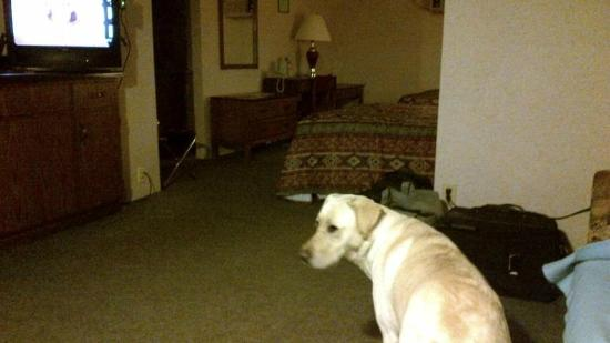 Arrowhead Inn: View from sitting area towards beds.  Pet friendly!