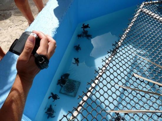 Sea Turtle Hatchery : Le centre de conservation