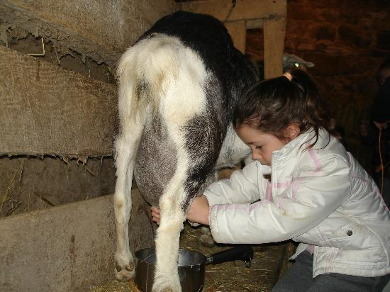 Olde Fogie Farm: milking the goat