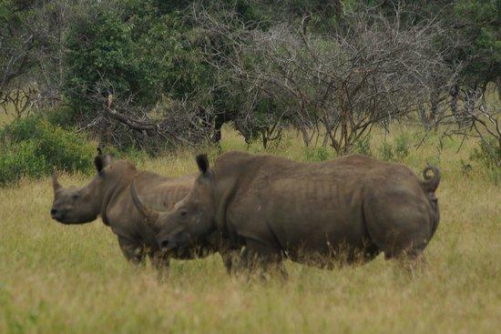 Zebra Hills Safari Lodge: Rhino