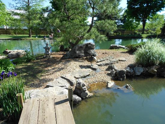 Pond With Geese Picture Of Mizumoto Japanese Stroll Garden Springfield Tripadvisor