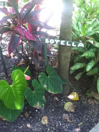 Viejamar Hostel: Los jardines de Viejamar.