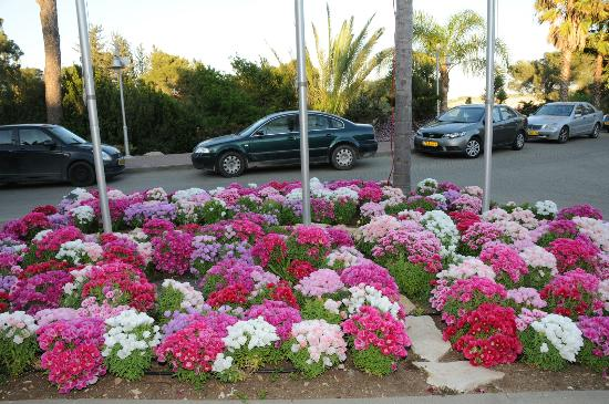 Gardenia Nazareth Hotel: View of a part of aflower bed