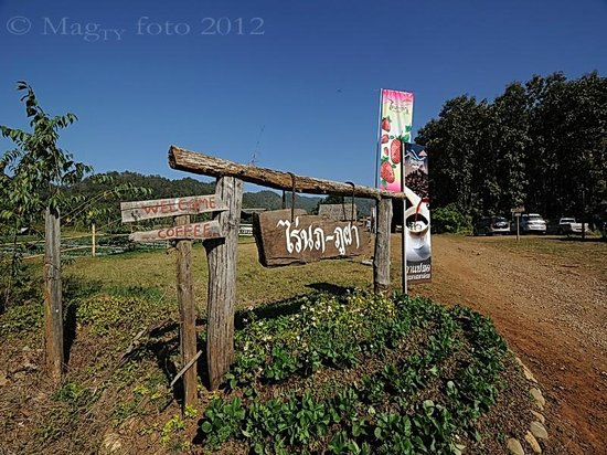 สะเมิง, ไทย: Entrance to napahupa aka nop phu pha strawberry farm