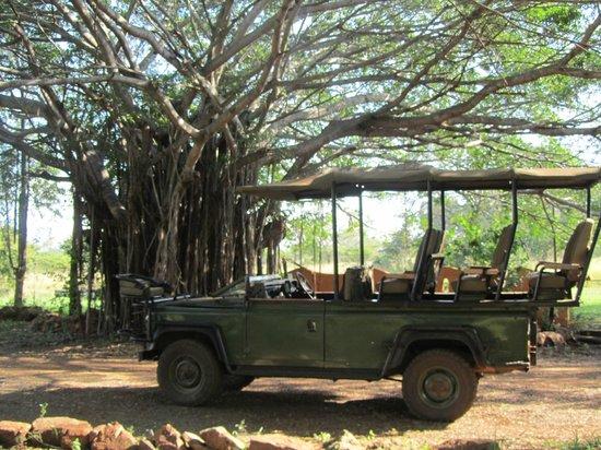 Zebra Hills Safari Lodge: Safari Jeep