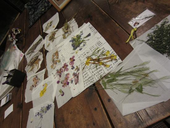 Pension Angelica: Made pressed flower pictures one evening