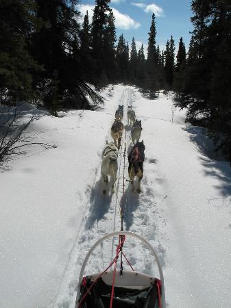 Sky High Wilderness Ranch: More dog mushing.