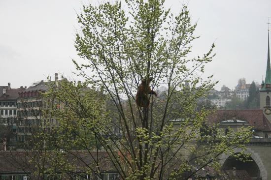 Holiday Inn Bern-Westside: Bear on the Tree
