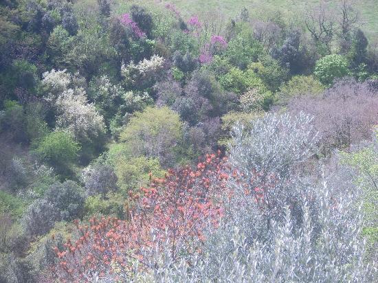 Il Panciolle: Spoleto a primavera - vista dal ponte