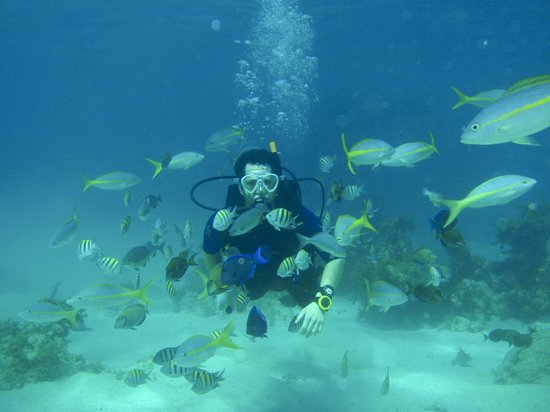 SeaPro Divers: More diving