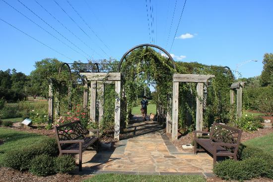 Rose garden area