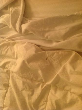 The Genesee Grande Hotel: stained comforter