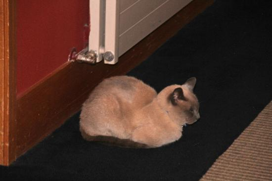 Commodore Airport Hotel, Christchurch: THe hotel cat Kim keeps guard of your room!