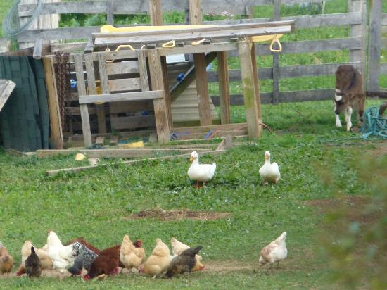 Southern Grace Bed and Breakfast: Farm animals