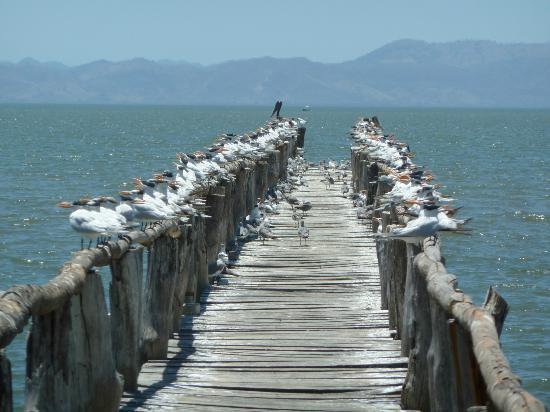 La Ensenada Lodge: mouettes et pélicans sur pontons