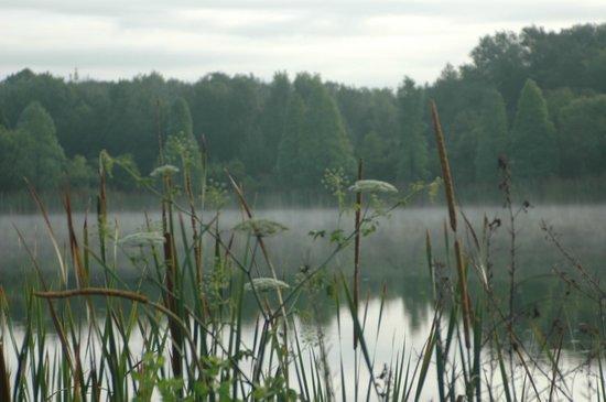 """Lithia, FL: """"Gator"""" Lake"""